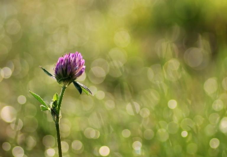 vivi-il-verde-orto-botanico-evento-guida-di-bologna