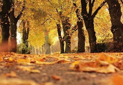 riconoscere-gli-alberi