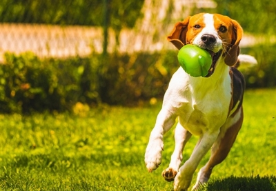 bologna-fiere-quattrozampeinfiera-cani-umani