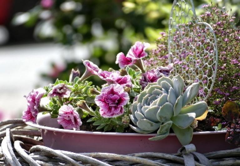 giardini-e-terrazzi-bologna-estate
